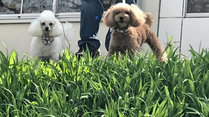 糸井重里さんの愛犬ブイヨンの死とペットロスと。