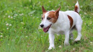 愛犬の死後、次の犬を飼うことに罪悪感を抱く必要はない